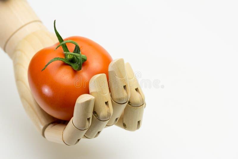 Drewniana ręka trzyma dojrzałego pomidoru zdjęcie stock