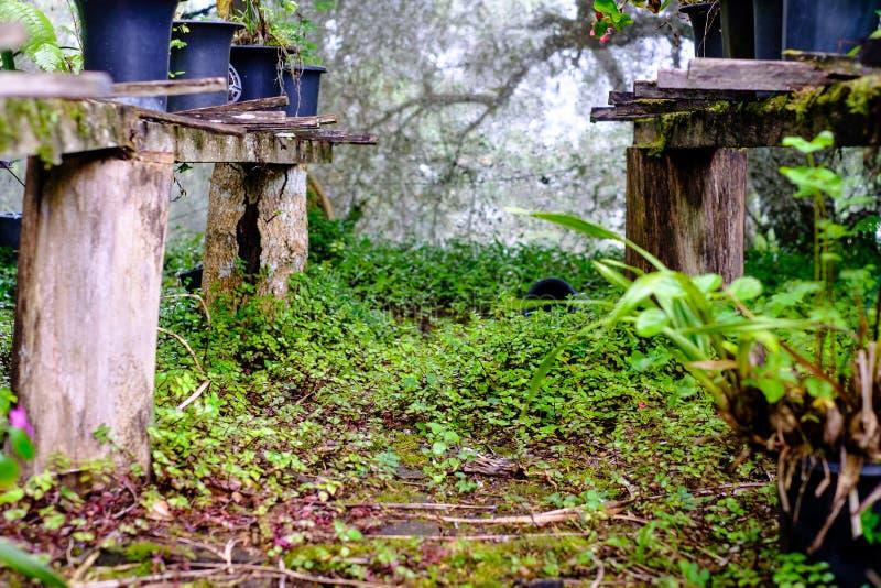 Drewniana struktura z różnorodnymi garnkami i wazami z zielonymi roślinami wewnątrz fotografia royalty free