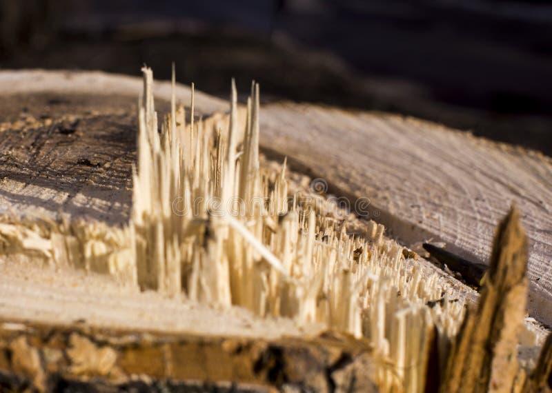 Drewniana tekstura Tekstura drzewo jest jasnobrązowa, piłuje, odłamek Tło obrazy royalty free
