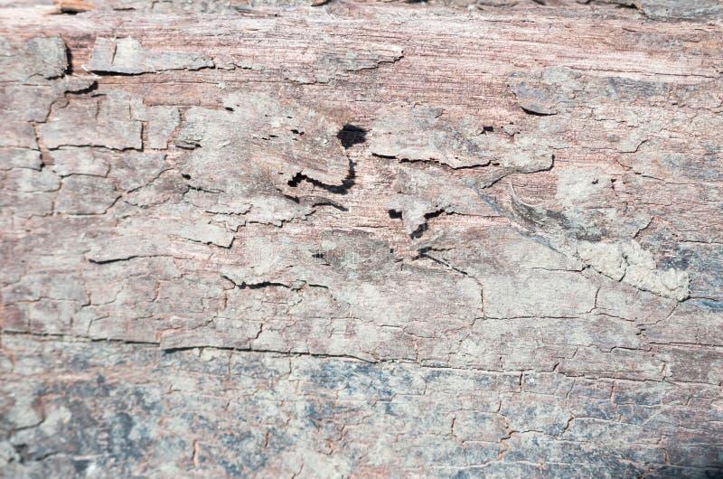 Drewniana tekstura jak widzieć w górę zakończenia z udziałami szczegół obraz royalty free