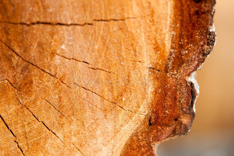 Drewniana tekstura rżnięty drzewny bagażnik obrazy stock