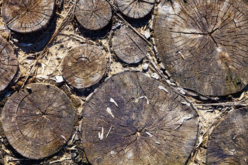 Drewniana tekstura, round cięcie zdjęcie royalty free
