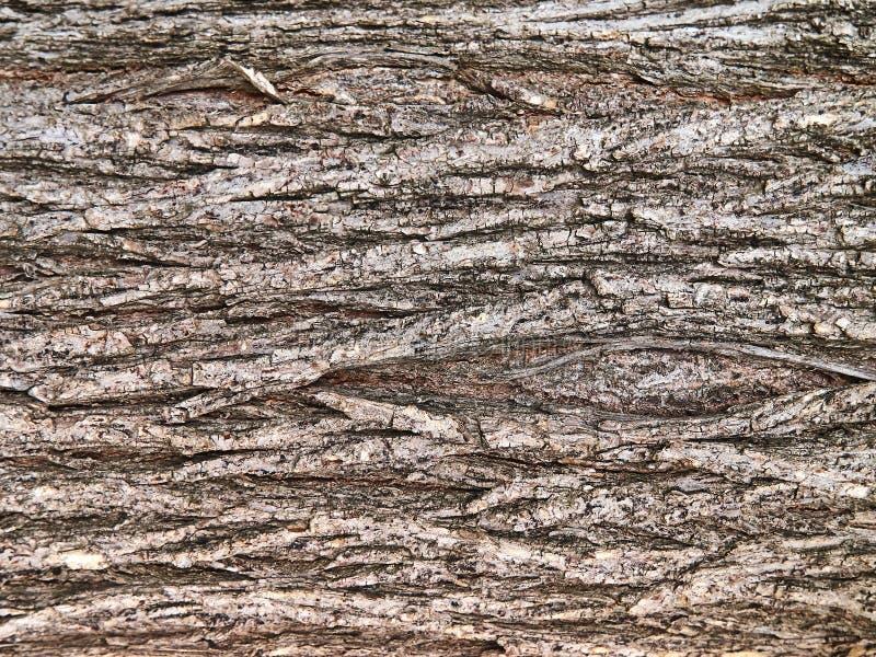 Drewniana tekstura szorstka powierzchnia barkentyna obraz stock