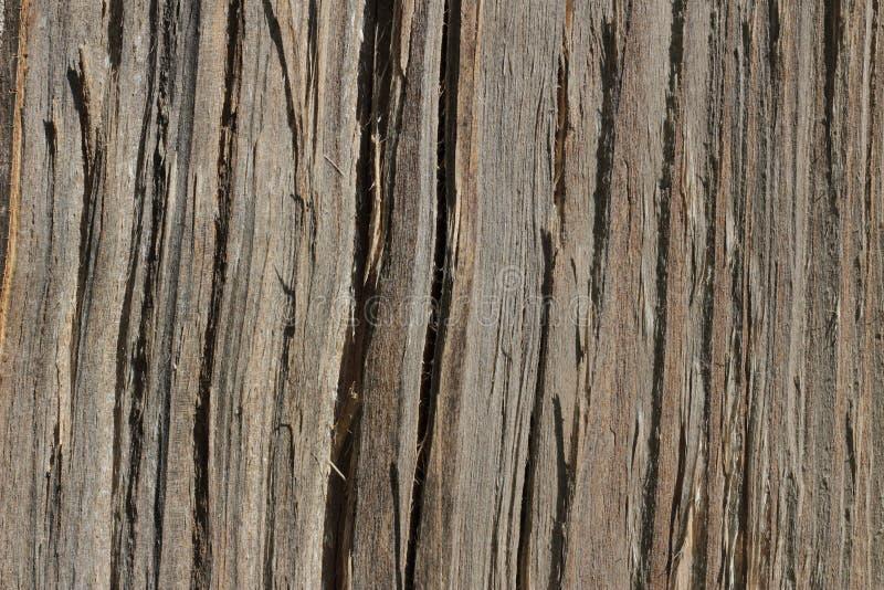 Drewniana tekstura Widok na cięciu drzewo w beżowych brzmieniach zdjęcie royalty free
