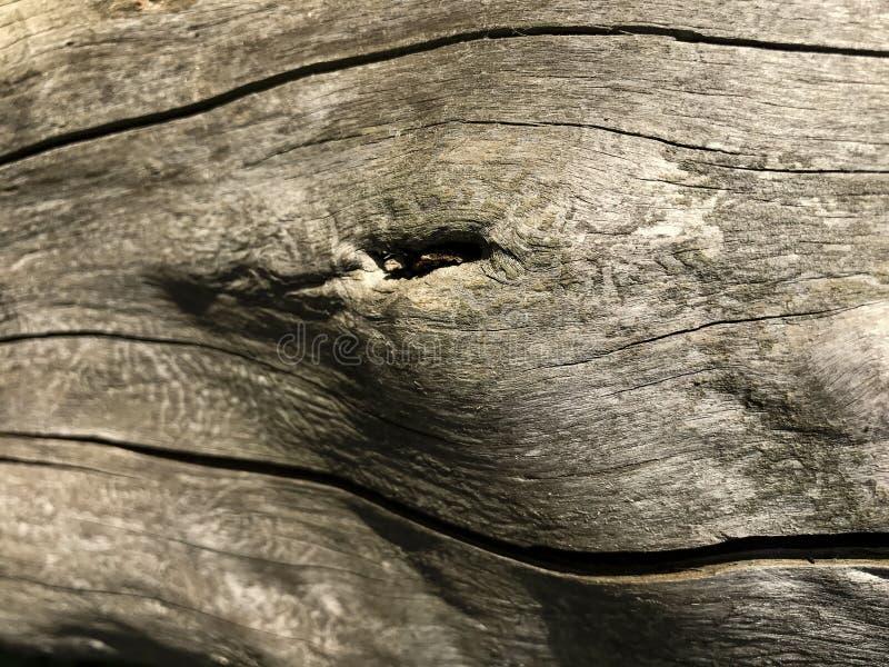 Drewniana tekstura z pęknięcie dobrym szczegółem Drzewnej barkentyny zakończenie Makro- strzelanina fotografia royalty free