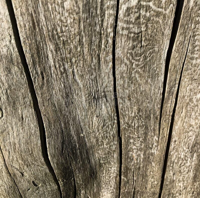 Drewniana tekstura z pęknięcie dobrym szczegółem Drzewnej barkentyny zakończenie Makro- strzelanina fotografia stock