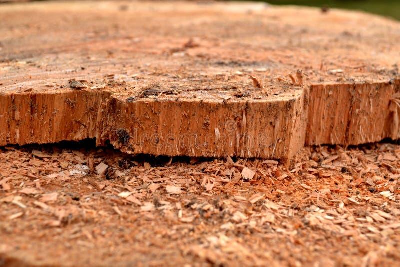 Drewniana tekstura z trocinowym tartakiem zdjęcie stock