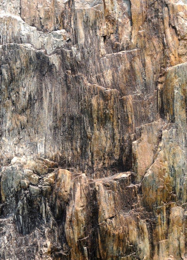 Drewniana wizerunek abstrakcjonistyczna skamieniała powierzchnia