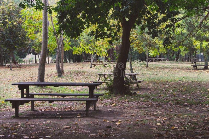 Drewniane ławki i stoły w pustym parku Odtwarzania i odpoczynku miejsca pojęcie Obozować i pykniczny miejsce w lesie zdjęcie stock