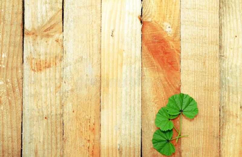 Drewniane deski z liśćmi zdjęcia stock