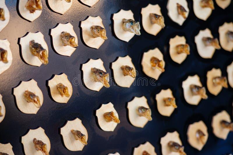 Drewniane osłony z wytapiają ryba głowę obrazy stock