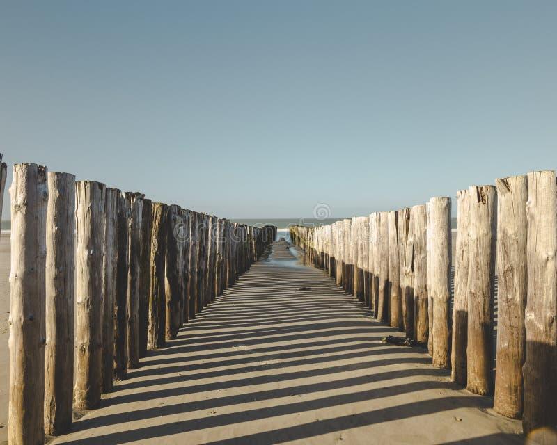 Drewniane poczty na plaży w holandiach obrazy stock
