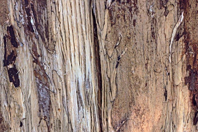 Drewnianego tekstury zbliżenia makro- szczegół w brown kolorze obrazy stock