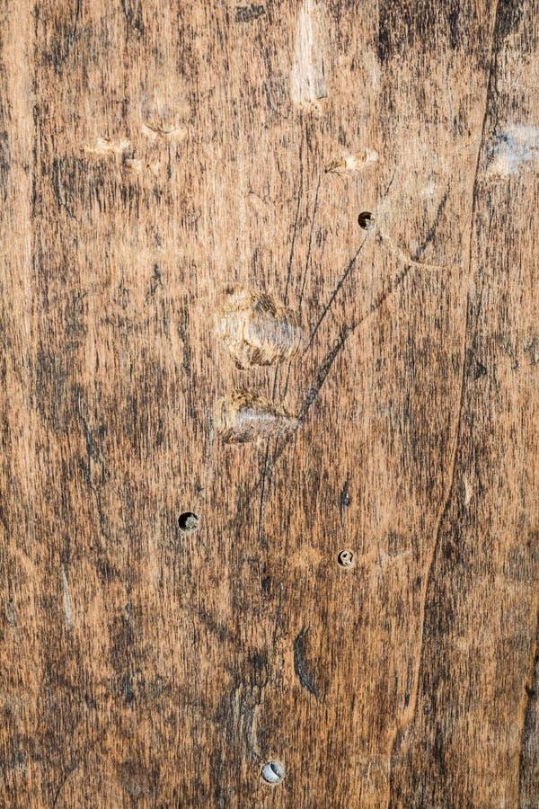 Drewnianej tekstury prawdziwy stary dąb szorstki drewno no jest jednolity obrazy royalty free