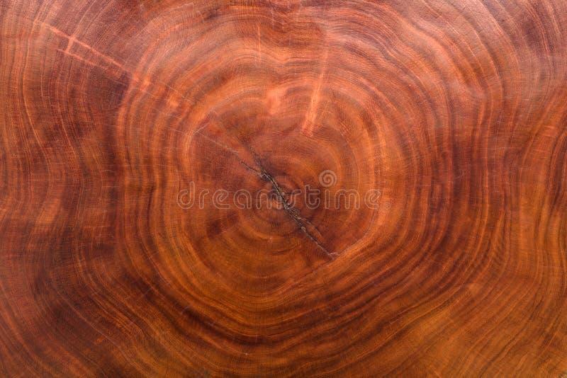Drewnianej tekstury rżnięty drzewny bagażnik fotografia stock