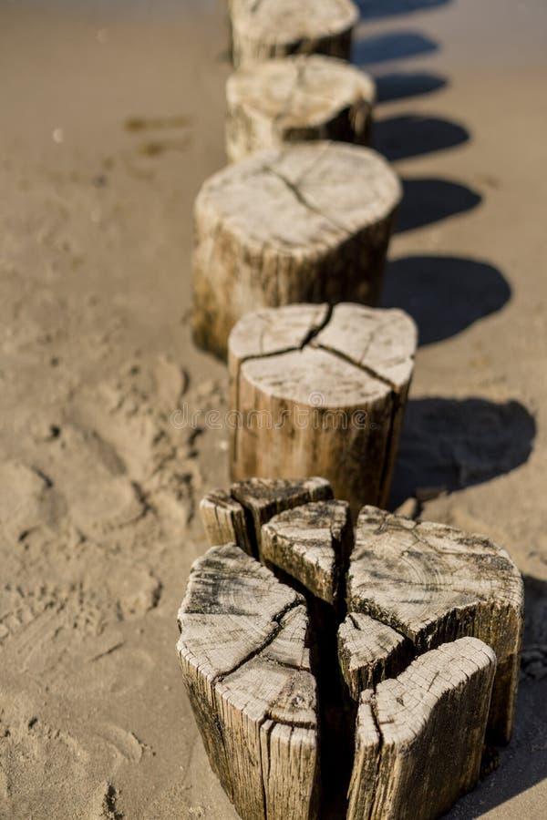 Drewniani groynes przy morzem bałtyckim obraz royalty free