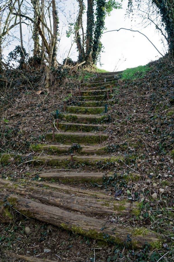 Drewniani kroki od beli i mech, drewniani schodki obraz stock