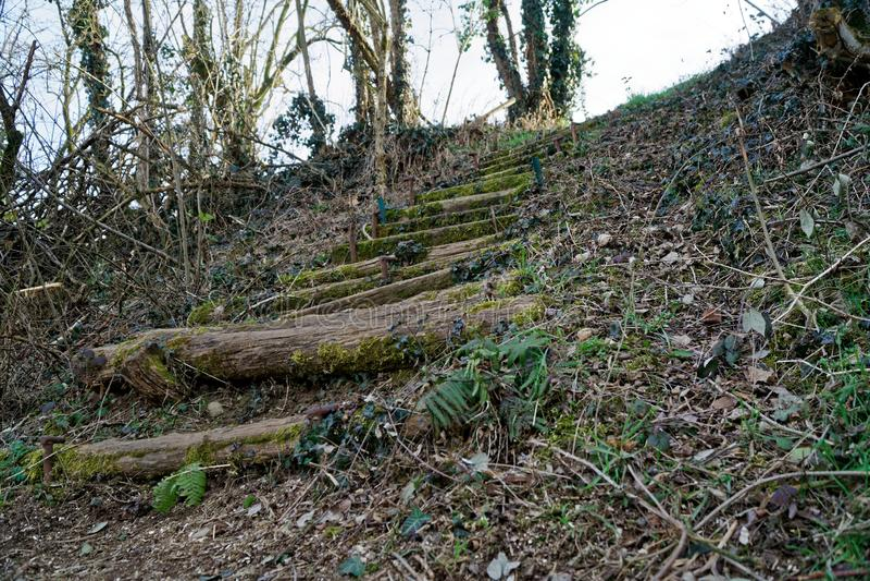 Drewniani kroki od beli i mech, drewniani schodki zdjęcia royalty free