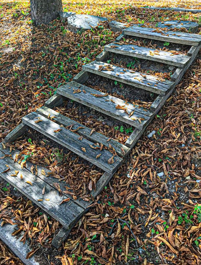 Drewniani kroki w złotym jesień lesie, turystyczny footpath zdjęcie royalty free