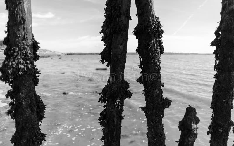 Drewniani Plażowi Defences Zakrywający w gałęzatce zdjęcie stock
