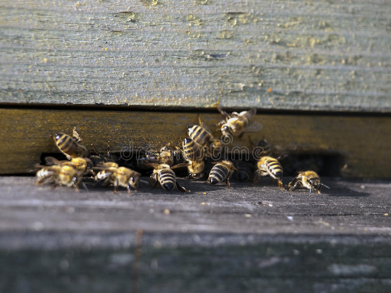 drewniani rojów honeybees zdjęcia royalty free
