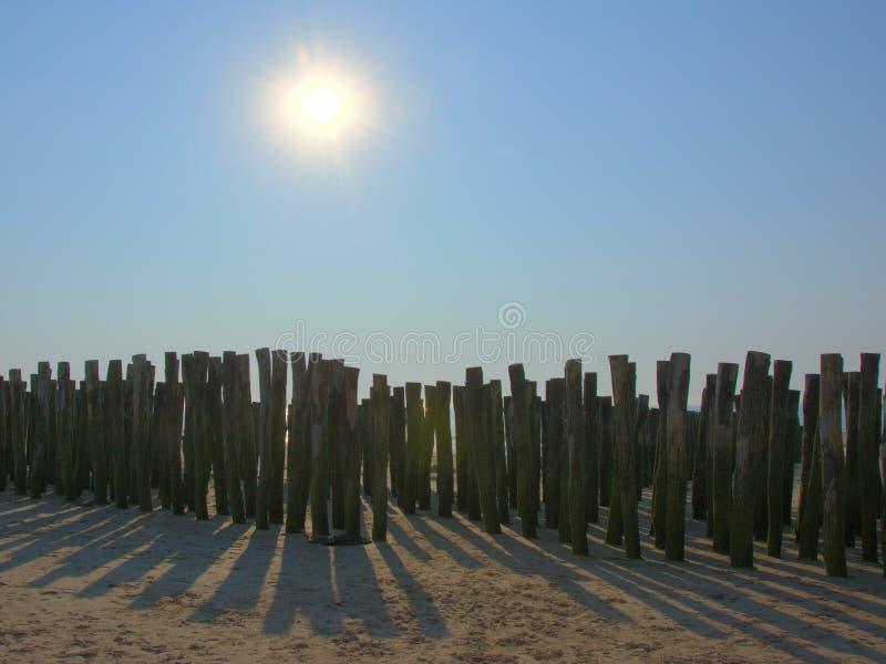 Drewniani słupy dla kultywaci bouchot mussels pod wieczór słońcem na plaży Wissant zdjęcie stock
