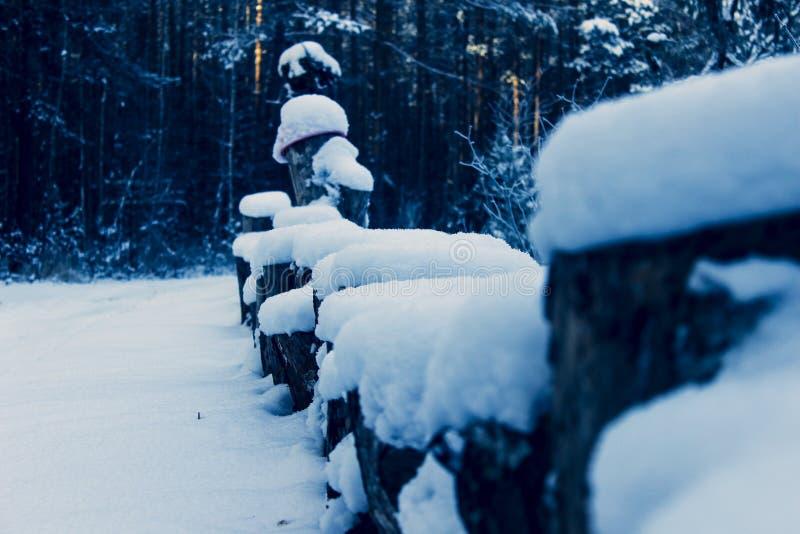 Drewniani sosnowi fiszorki pod śniegiem fotografia stock