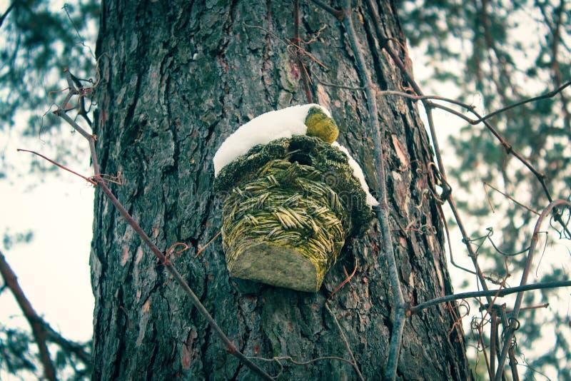 Drewniani sosnowi fiszorki pod snowA domem dla ptaków na sośnie fotografia stock