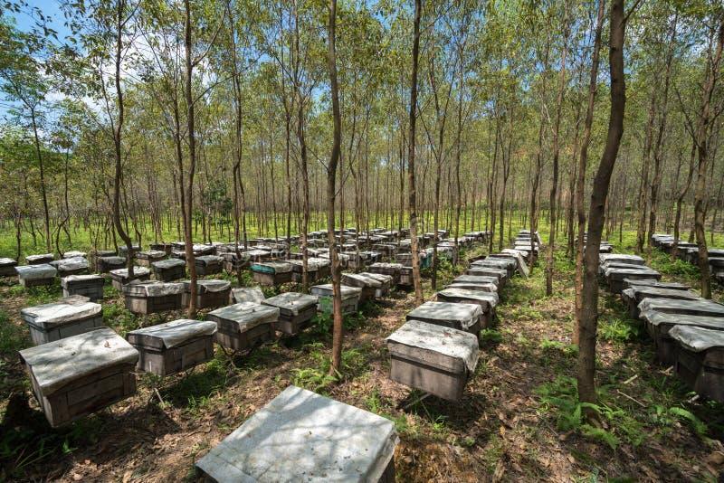 Drewniani ule w lasach w Wietnam zdjęcie royalty free