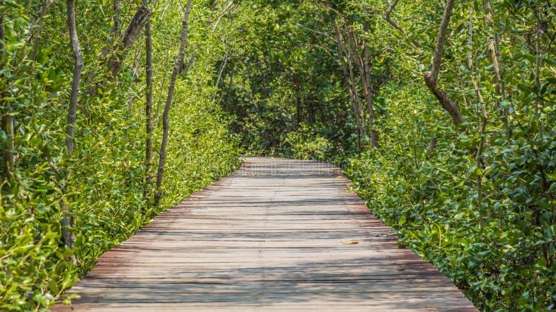 Drewniany ścieżka spacer tropikalny las zdjęcie royalty free