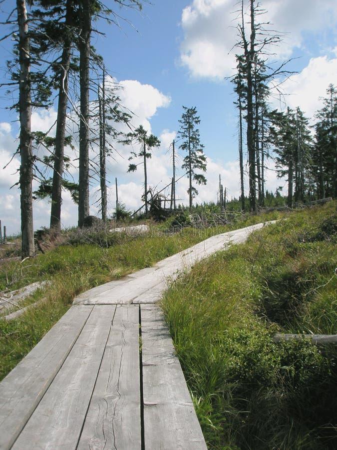 drewniany ścieżki peatery obraz royalty free