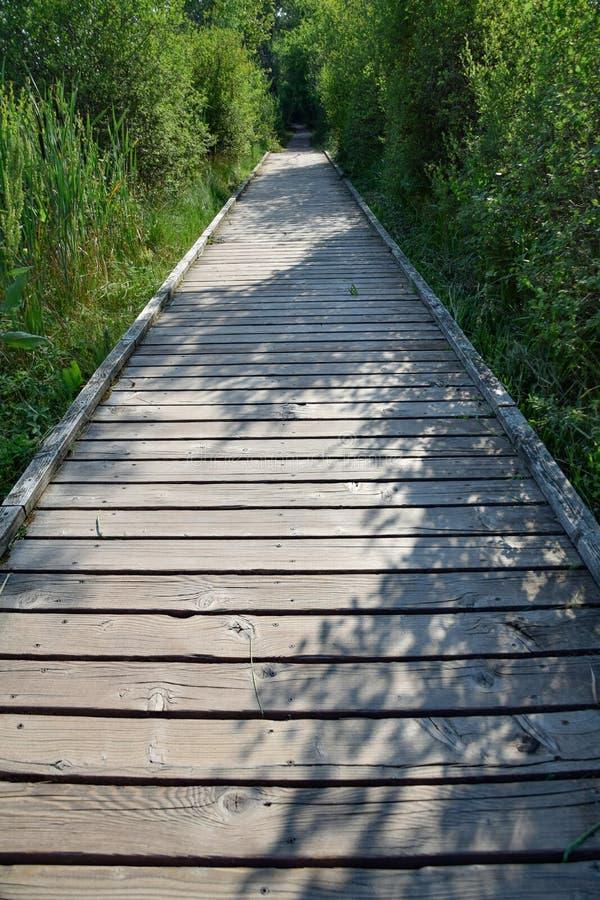 Drewniany boardwalk przy Schwenninger Muczy, Niemcy fotografia royalty free