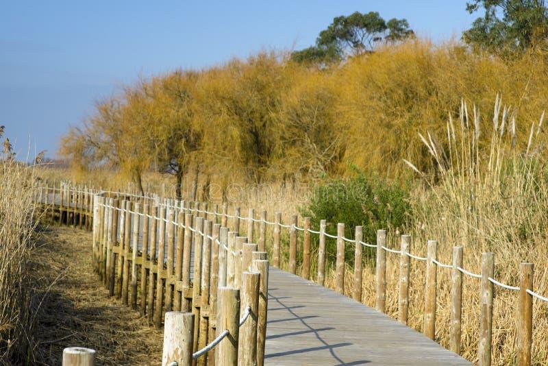 Drewniany chodnik Barrinha z rezerwatu przyrody Esmoriz fotografia stock