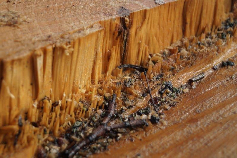 Drewniany cięcie, drewniany jar fotografia stock
