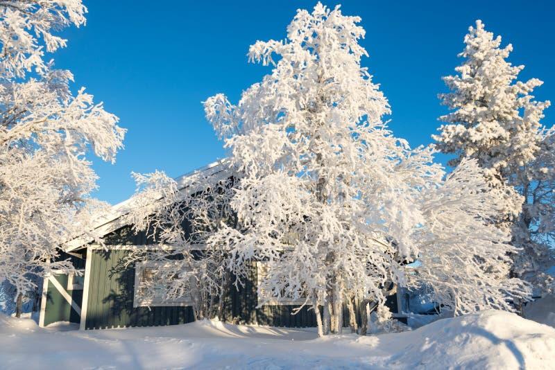 Drewniany dom i śnieżni drzewa, Lapland Finlandia zdjęcie royalty free