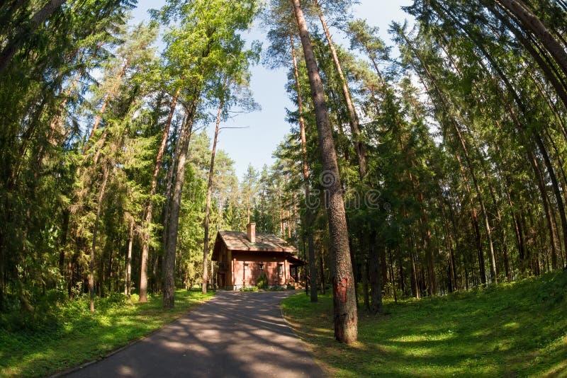 Drewniany dom w Sosnowym lesie zdjęcie stock