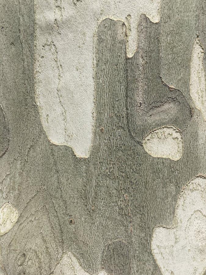 Drewniany drzewo fotografia royalty free