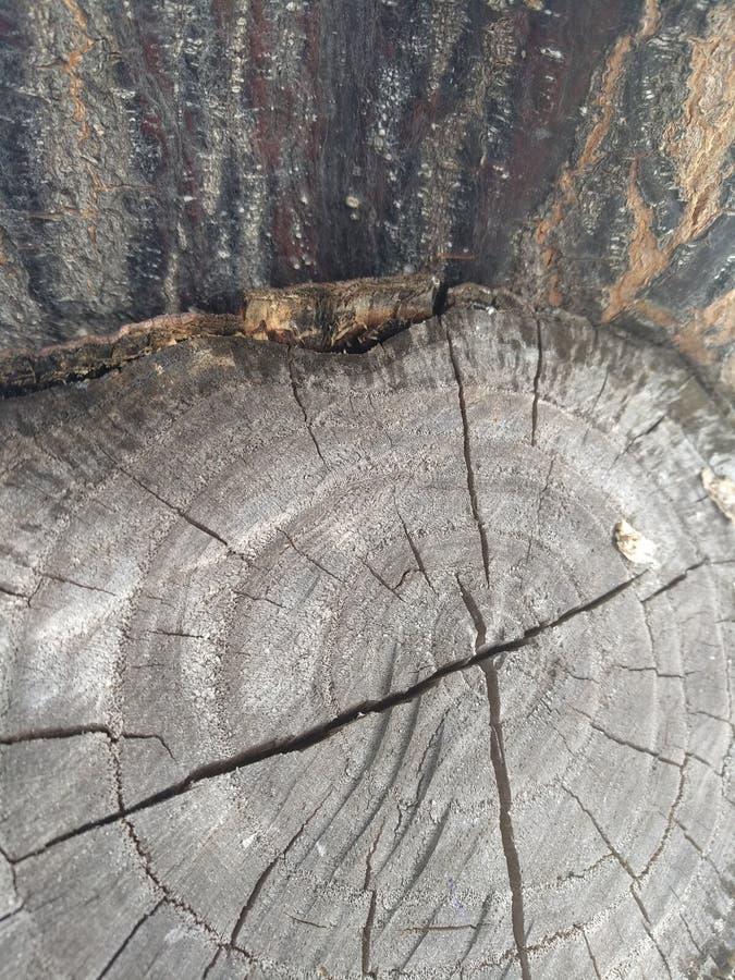 Drewniany fiszorków pęknięć wiek dzwoni drzewa obrazy stock