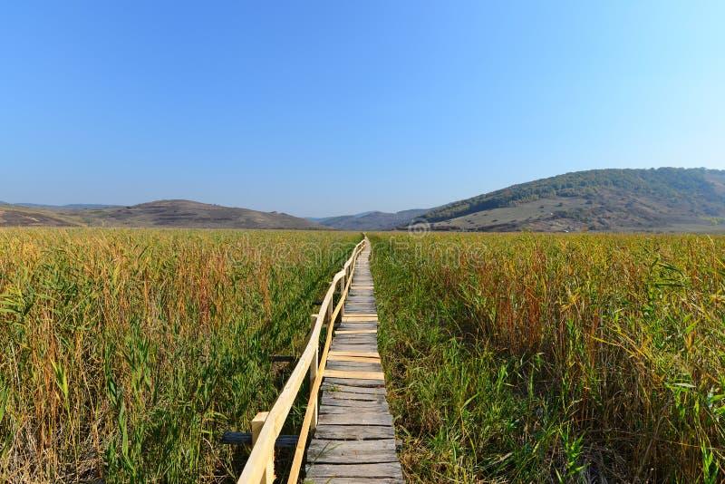 Drewniany footbridge w jesieni przy Sic płochy rezerwą obraz royalty free