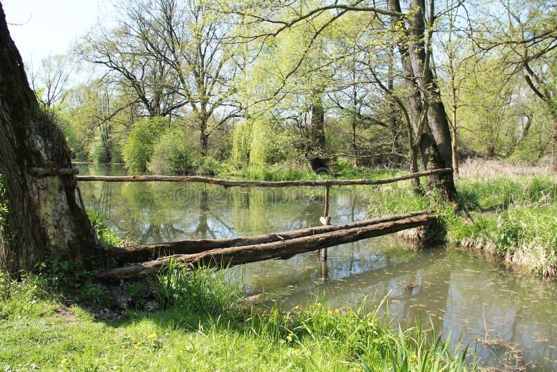Drewniany gangplank fotografia royalty free