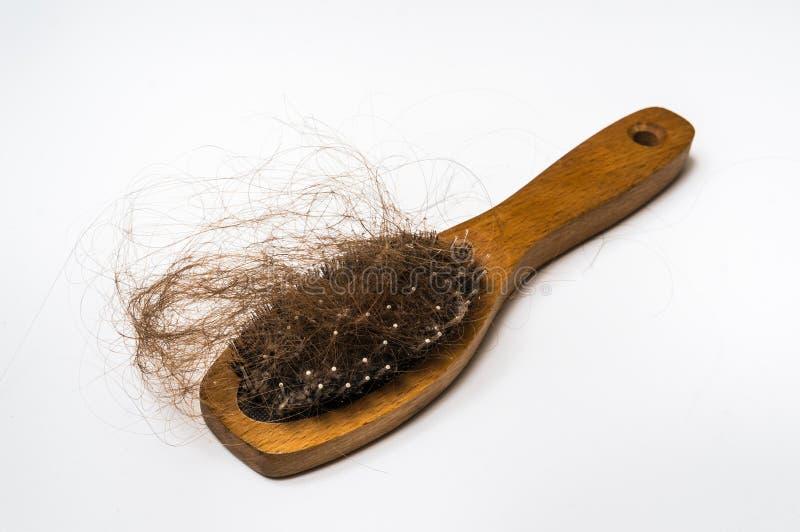 Drewniany grępli muśnięcie z przegranym włosy obrazy royalty free