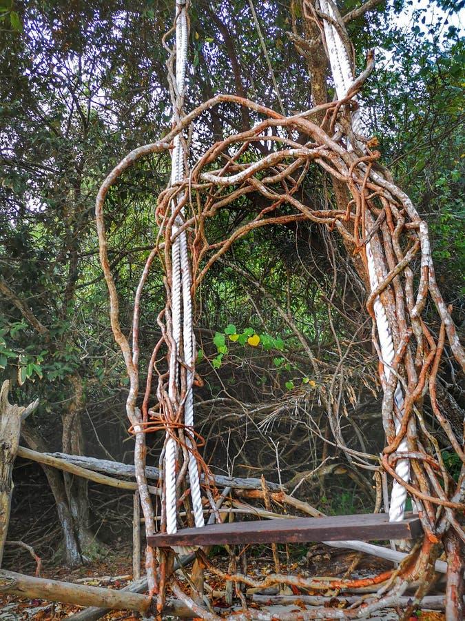Drewniany korzeń huśtawki krzesła obwieszenie na drzewnej pobliskiej plaży na dennym brzeg obrazy royalty free