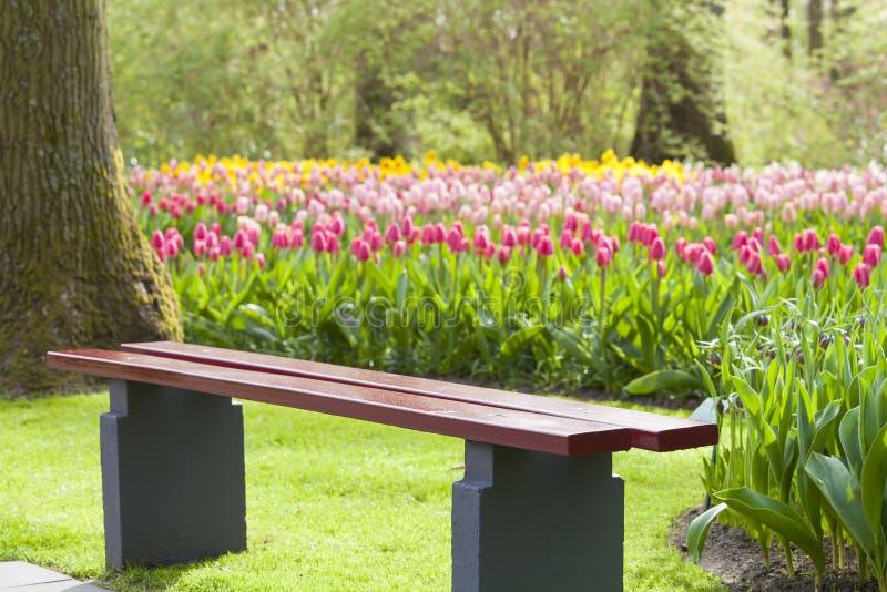Download Drewniany Krzesło W Tulipanowym Colourful Parku Zdjęcie Stock - Obraz złożonej z przyrost, migreny: 53788650