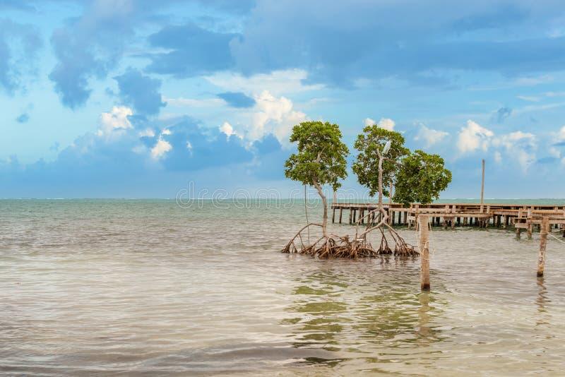 Drewniany molo dok, widok na ocean przy Caye doszczelniaczem Belize Karaiby i zdjęcia royalty free