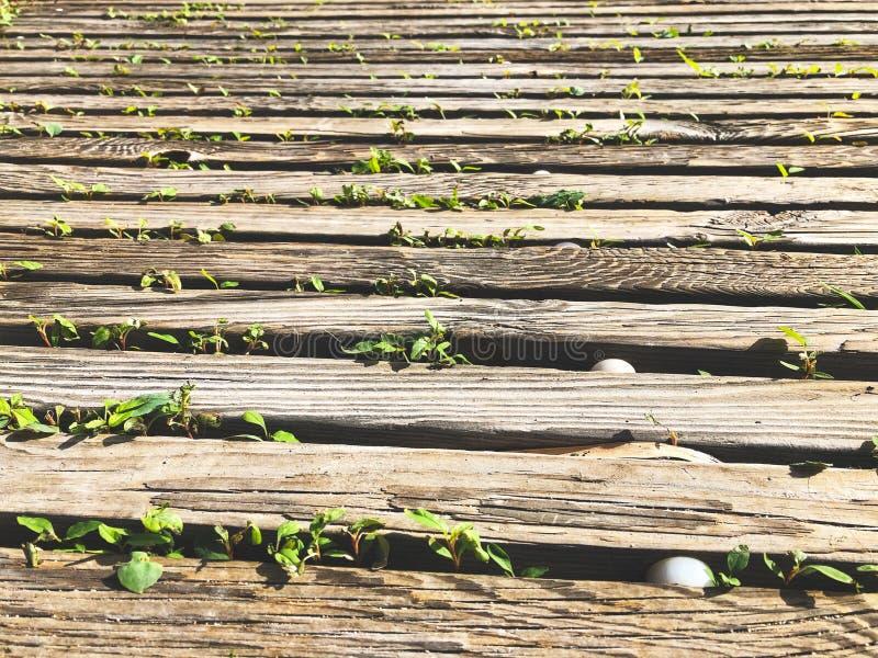 Drewniany molo, przejście plenerowy/, drewno deskowa podłoga obrazy stock