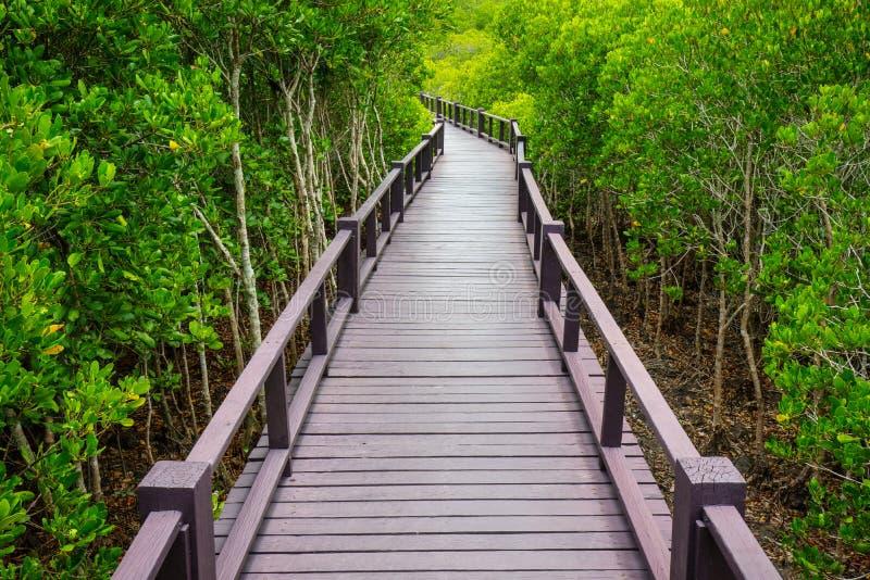 Drewniany most dżungla, Tajlandia obrazy royalty free