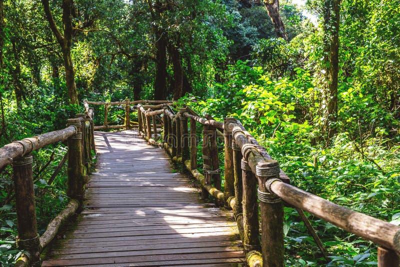 Drewniany most dla spaceru na wiecznozielonym lesie fotografia royalty free