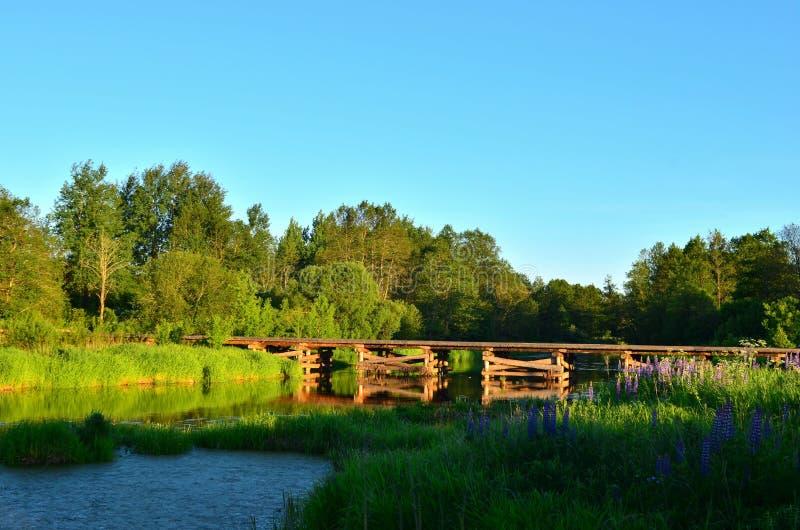 Drewniany most drzewo bele kłama przez małą rzekę wśrodku obszaru zalesionego wśród zielonej natury obrazy royalty free