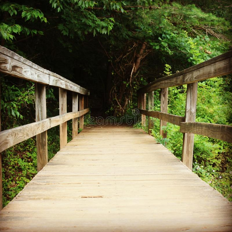 Drewniany most prowadzi w las obraz royalty free