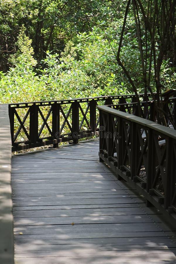 Drewniany most w?rodku tropikalnego namorzynowego lasu zdjęcia royalty free